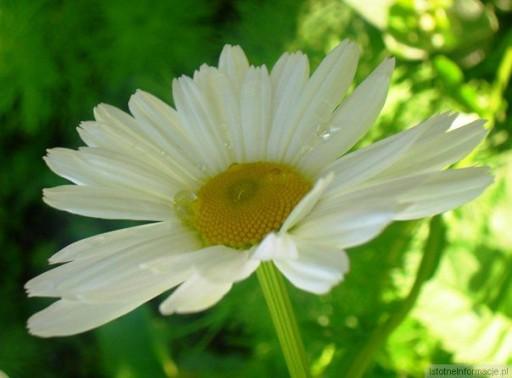 I znowu kwiatki