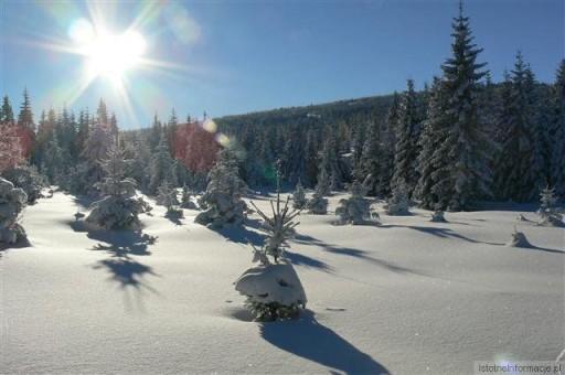 Zima 2010