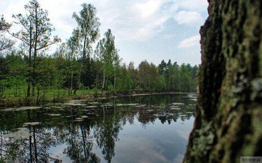 Jeziorko w lesie na wschód od Bolesławca