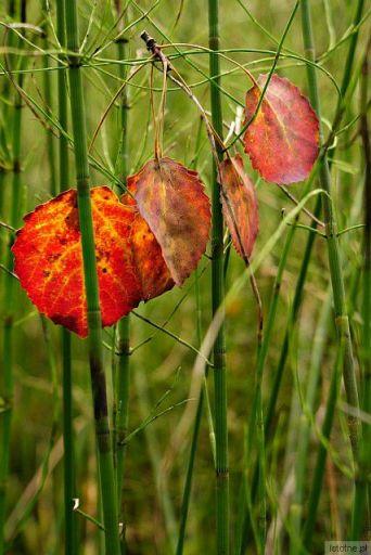w kolorach wczesnej jesieni