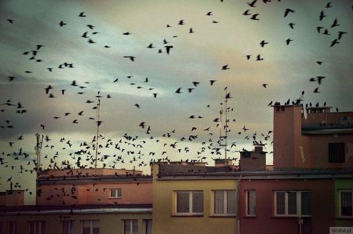 A,nad dachami,nad dachami..