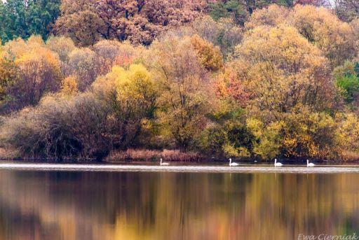 Zbiornik Krępnica koło Bolesławca w kolorach jesieni