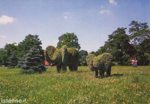 Słonie - kompozycja roślinna w Bolesławcu (rok 1985)