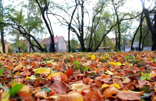 Jesienne kolory w Bolesławcu