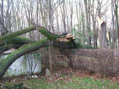 Złamane drzewo przy ulicy Jeleniogórskiej