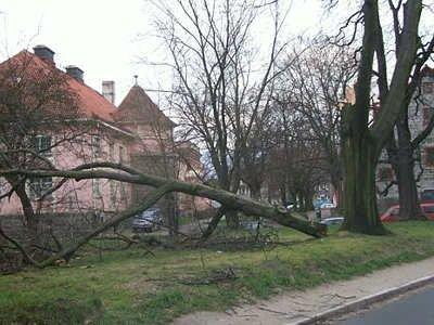 Złamana gałąź drzewa przy ulicy Zgorzeleckiej