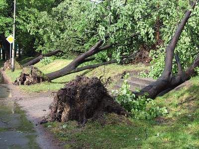 Powyrywane drzewa przy ul. Spółdzielczej
