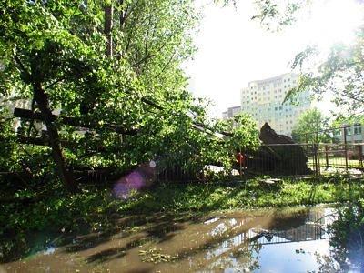 Wyrwane drzewo z korzeniami przy ulicy Wańkowicza