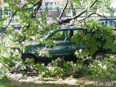 Połamane drzewo na aucie przy hali sportowej I LO
