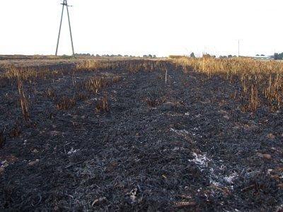 W Lubkowie ogień strawił 30 hektarów pola