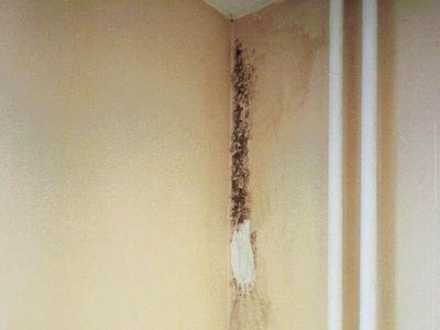 Grzyb na ścianie. Zdjęcie wykonane latem 2007 r.