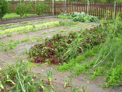 Grad zniszczył rośliny w przydomowych ogródkach