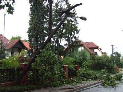 Na ul. Leśnej konar spadł na latarnię uliczną i zerwał przewody elektryczne