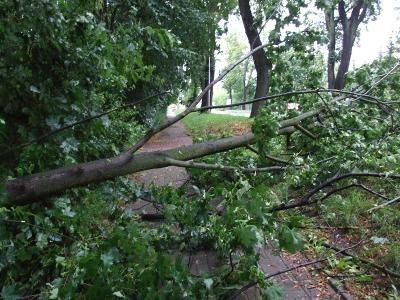 Wiat powalił drzewo na chodnik przy ul. Jeleniogórskiej