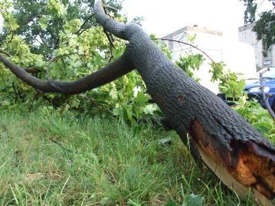 Na ul. Kosiby konar drzewa spadł niedaleko zaparkowanych samochodów