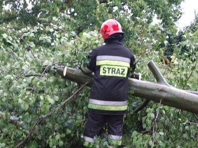 Strażacy wyjeżdżali usuwać drzewa leżące na ulicach