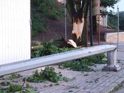Złamane przez wichurę drzewo spadło na latarnię uliczną