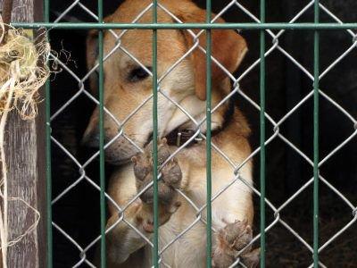 Członkowie Stowarzyszenia psami z Zieleń-Planu opiekują się codziennie
