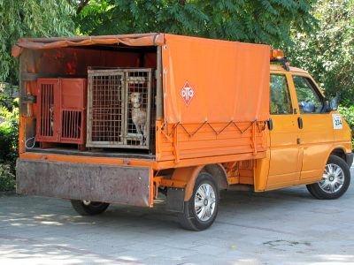 Tym samochodem przewieziono psy do schroniska w Jeleniej Górze