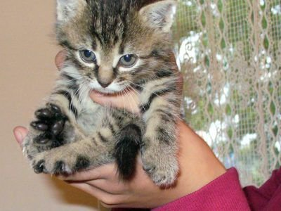 Kilkutygodniowy kotek uratowany przez Dominikę. Ustawa o ochronie zwierząt jednoznacznie definiuje porzucenie i uwięzienie zwierzęcia jako znęcanie się nad nim