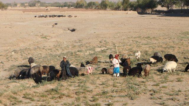 Dzieci tubylców wypasające kozy koło bazy. z-index: 0