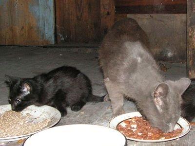 Bezdomnymi kotami opiekują się sami bolesławianie