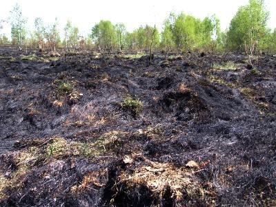 Pożar strawił co najmniej kilka hektarów nieużytków