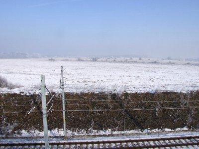 Martwe ptaki leżały na polu między Bolesławcem a Dobrą