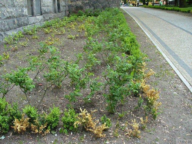 Planty są ubogie w roślinność i praktycznie bez kwiatów, przyniosłyby wstyd każdemu ogrodnikowi
