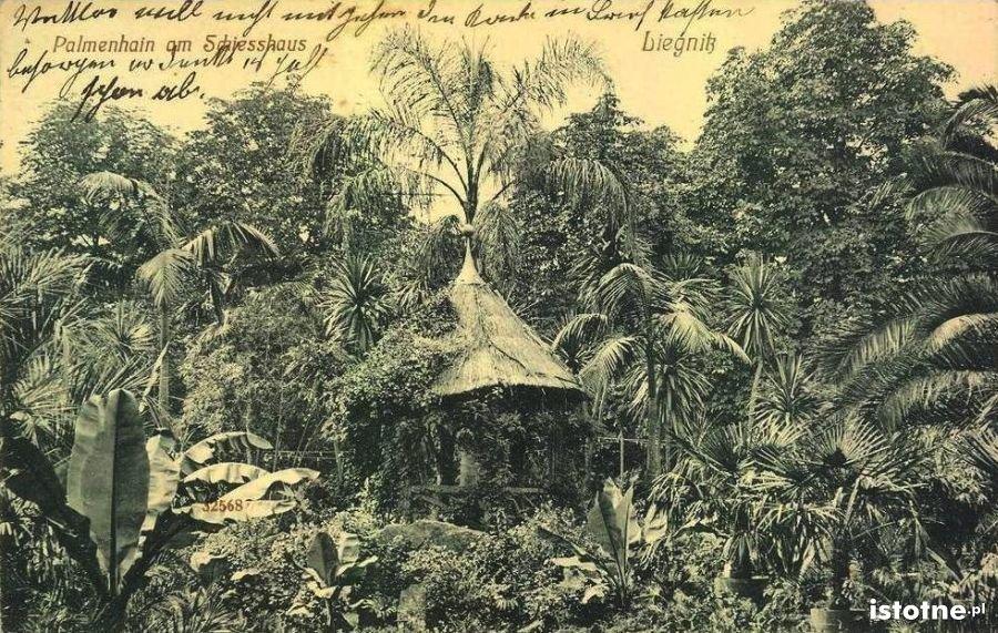 Pocztówka z 1912 r. prezentująca palmy w Gaju Muz
