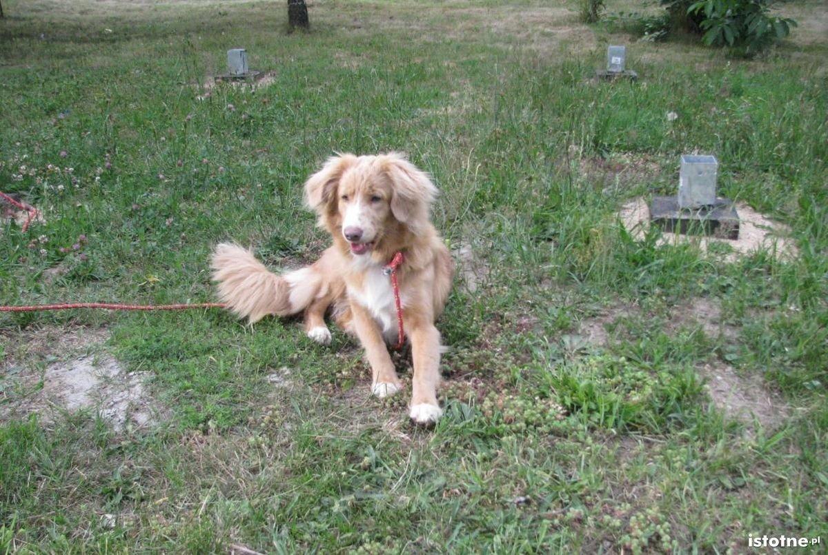 Pies zaginął 28 grudnia. Reaguje na imię Frida.
