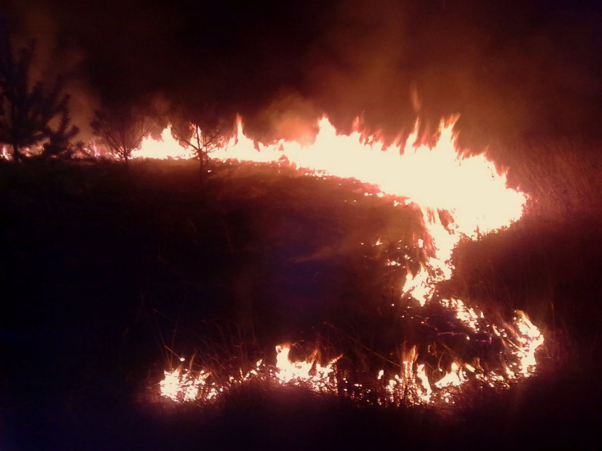 Płonąca trawa przy ulicy Kościuszki