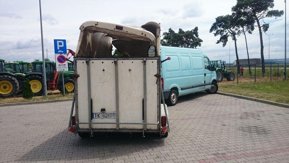 Koń ucierpiał w wypadku na autostradzie A4