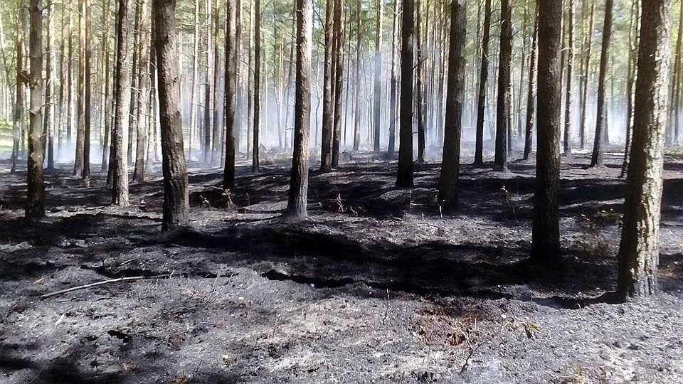 Pożar lasu koło Osiecznicy
