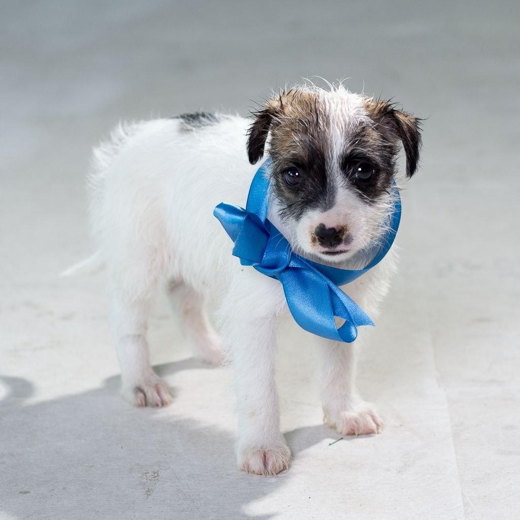 Pieski do adopcji