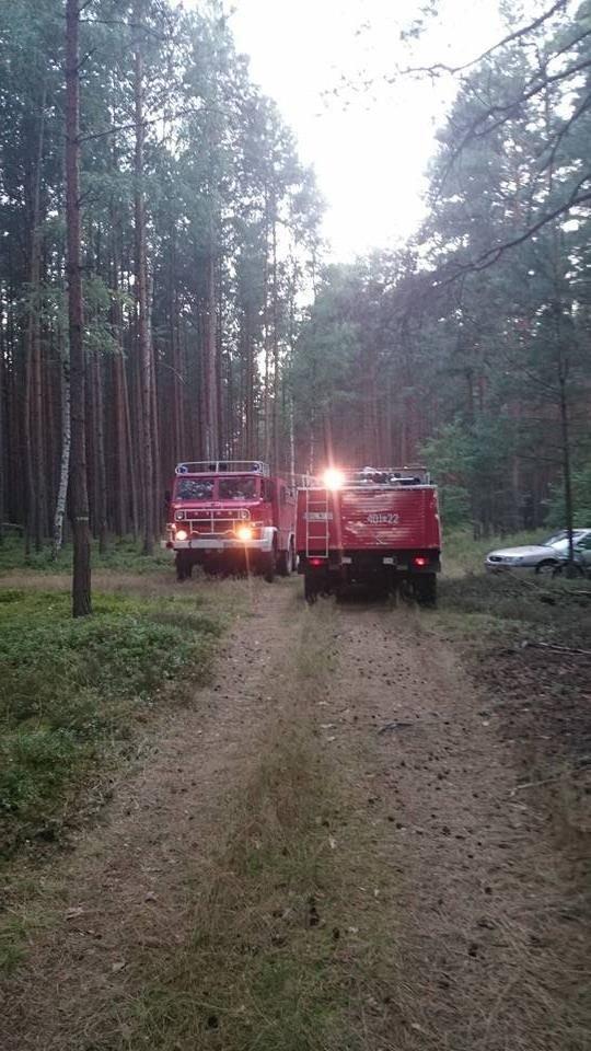 Pożar lasu w Krzyżowej