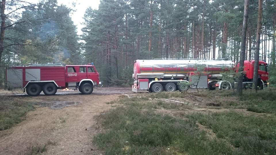 Pożar lasu między Borówkami a Trzebieniem