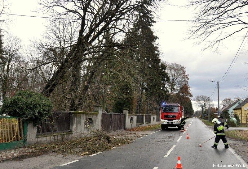 Silny wiatr powalił drzewo. Strażacy interweniowali z-index: 0