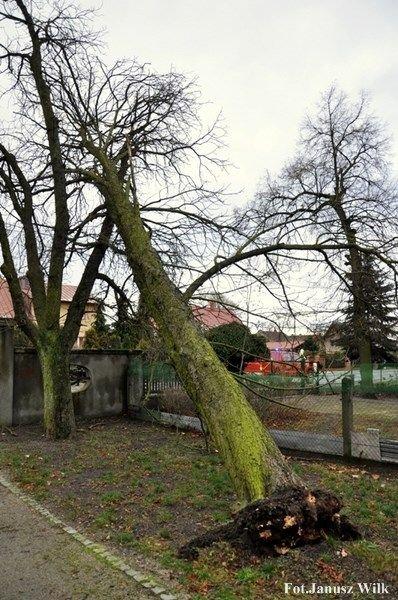 Silny wiatr powalił drzewo. Strażacy interweniowali