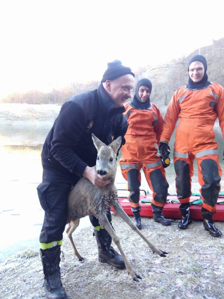Uratowany przez strażaków koziołek jest cały i zdrowy