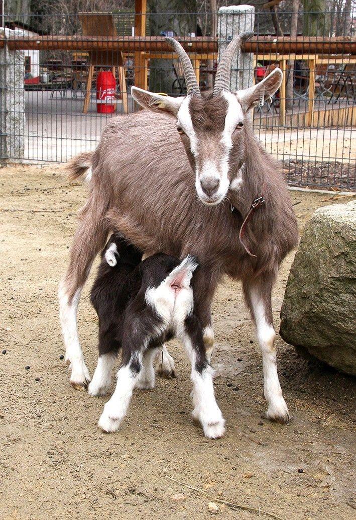 Baby boom w Naszym Zoo