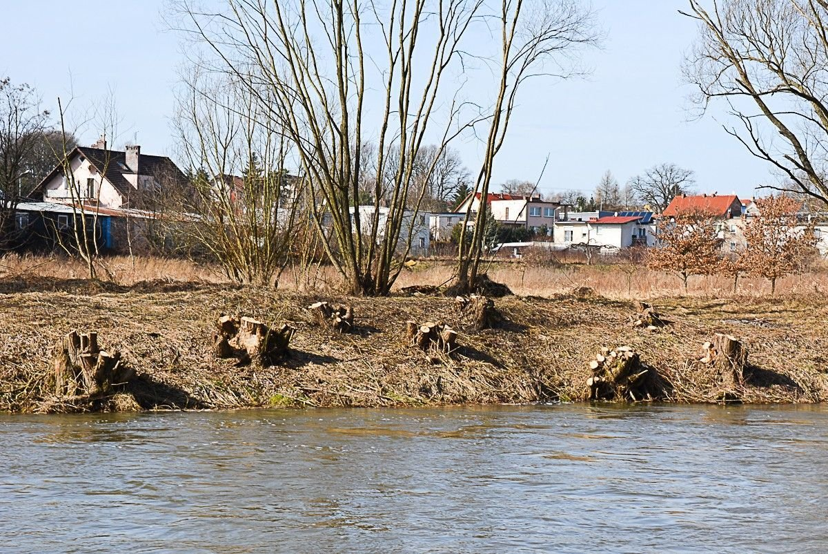 Kilkadziesiąt drzew zniknęło znad Bobru