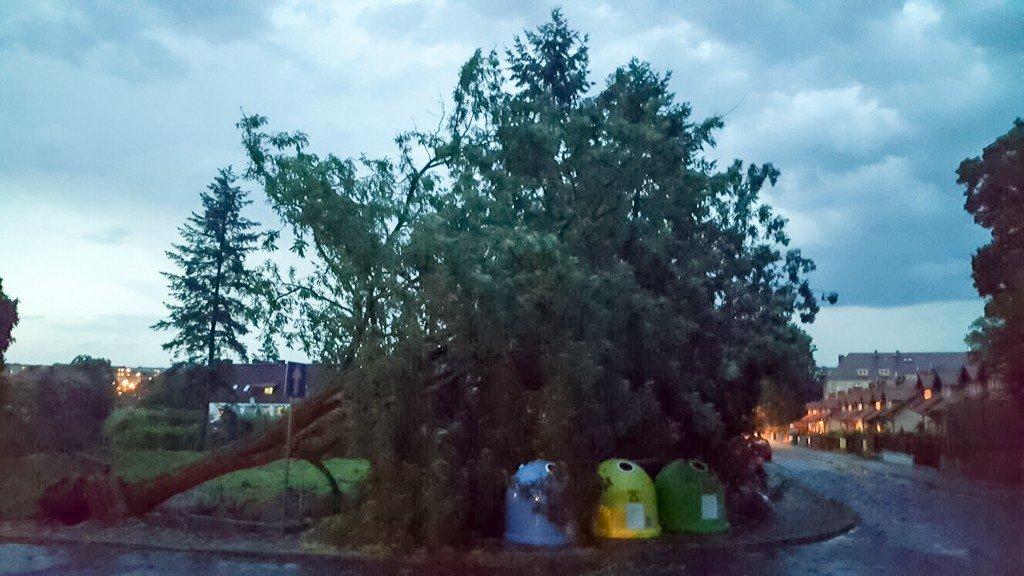 Powalone drzewo po nawałnicy