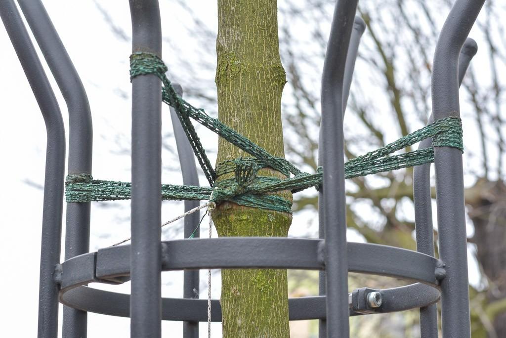 Drzewka na Asnyka się męczą? z-index: 0