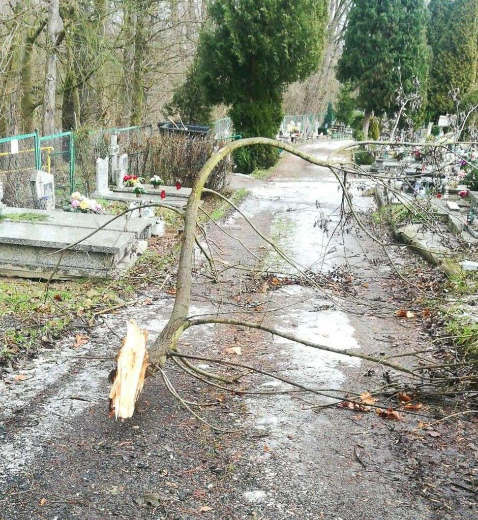 Złamana gałąź na cmentarzu komunalnym w Bolesławcu