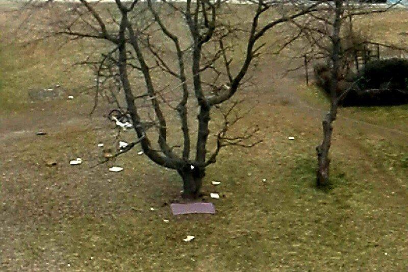 Drzewo i śmieci.