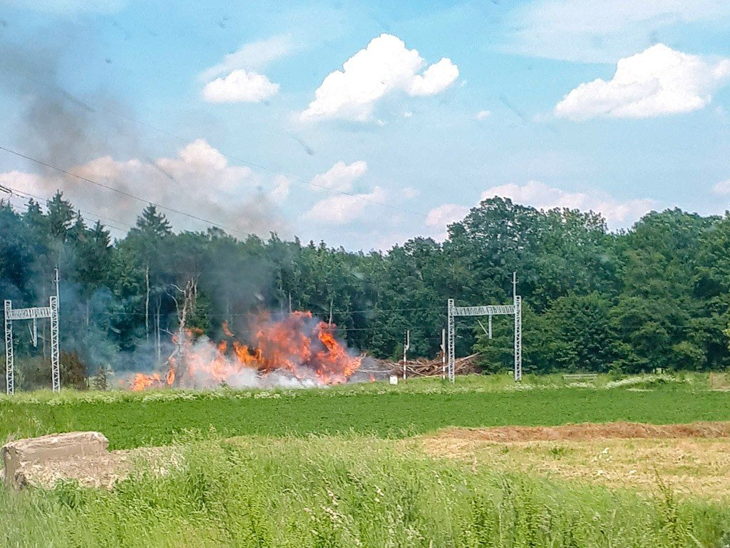 Pożar gałęzi i drewna w Wilczym Lesie