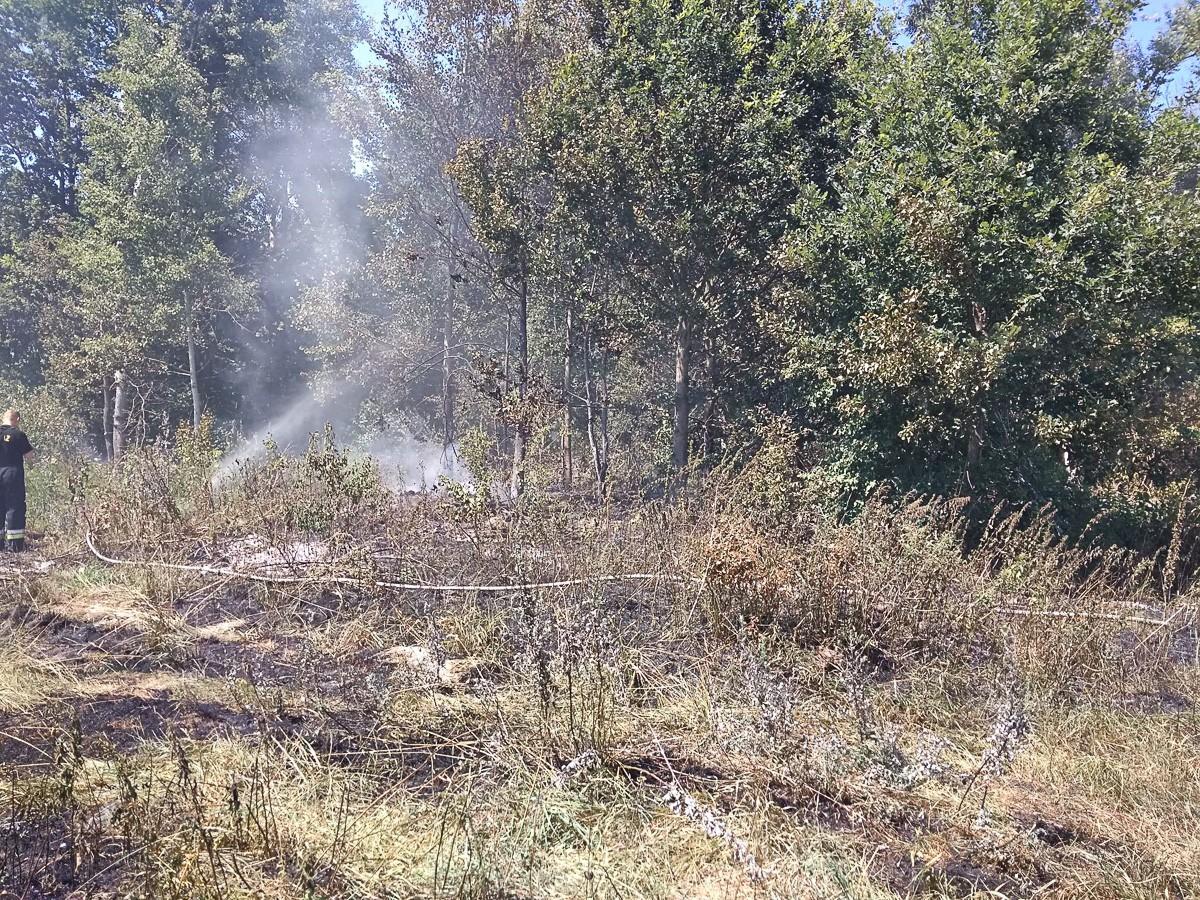Wywieźli śmieci do lasu i je podpalili z-index: 0