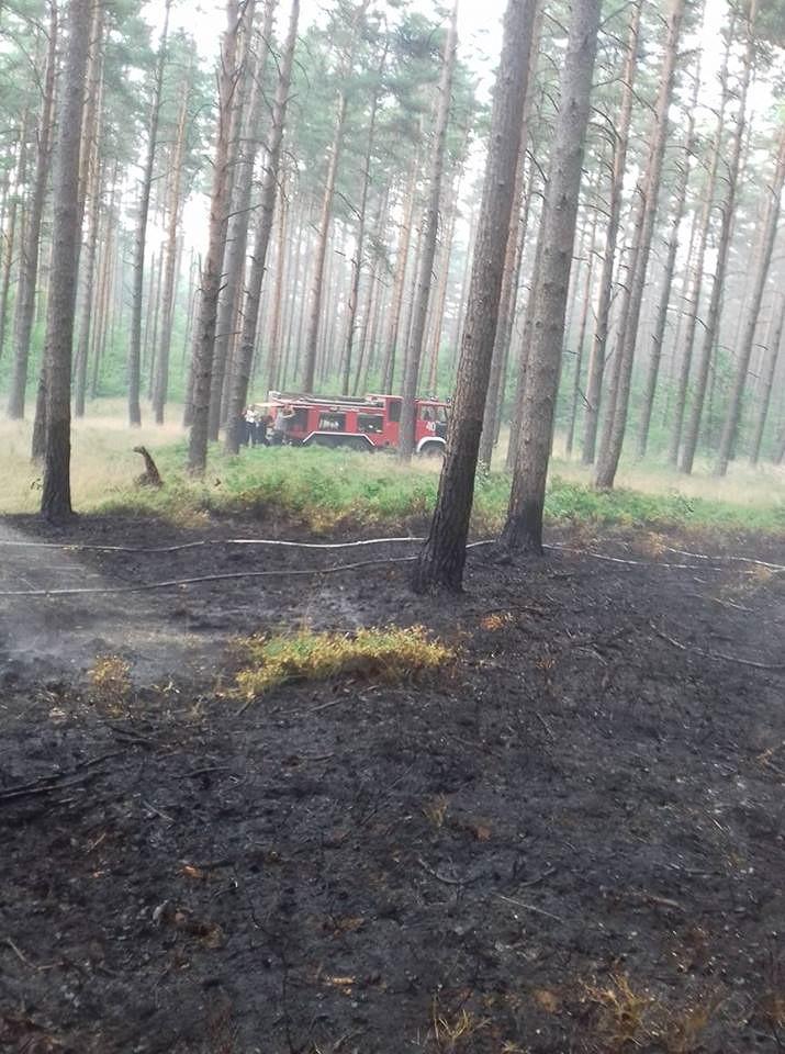 Kolejny pożar lasu z-index: 0