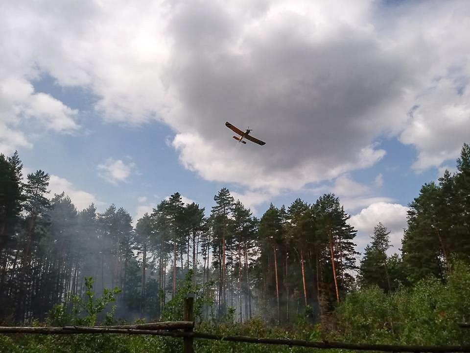 Pożary lasu w Węglińcu. Prawdopodobna przyczyna: podpalenie